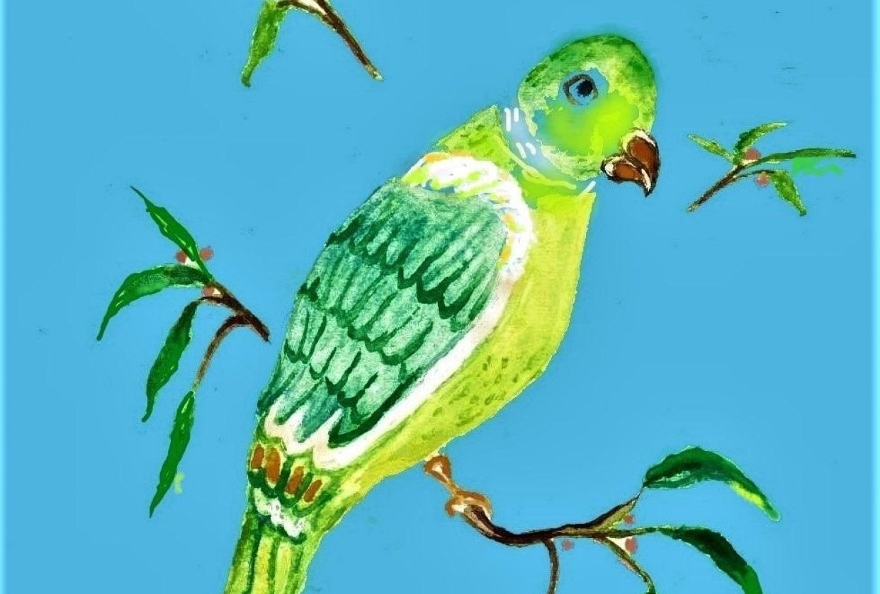 New Green Parrot - student project