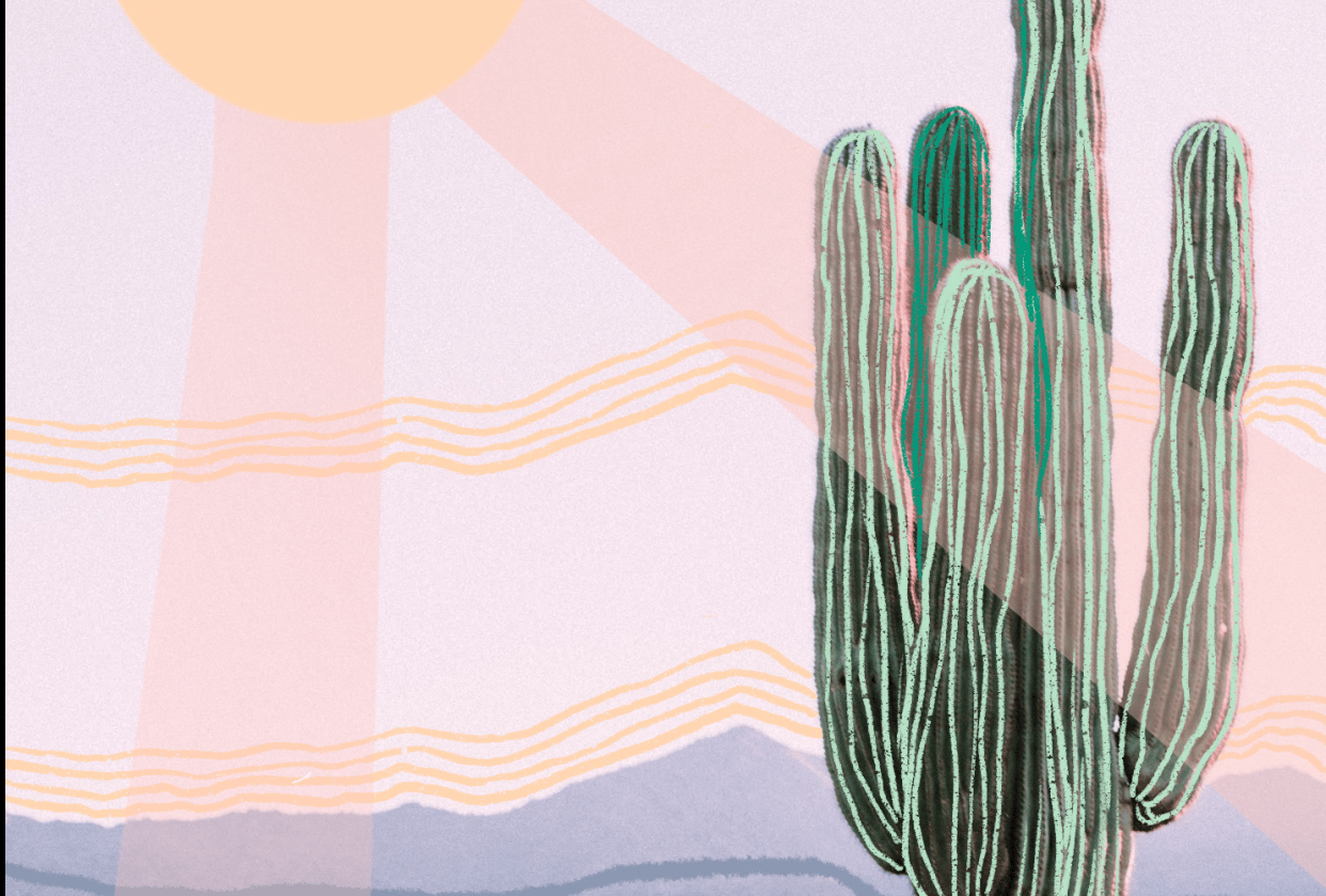 the lonely cactus - student project