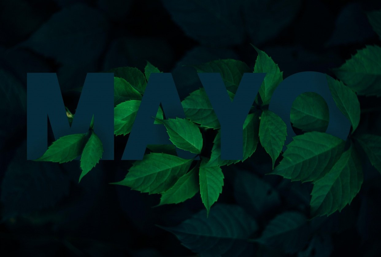 MAYO - student project