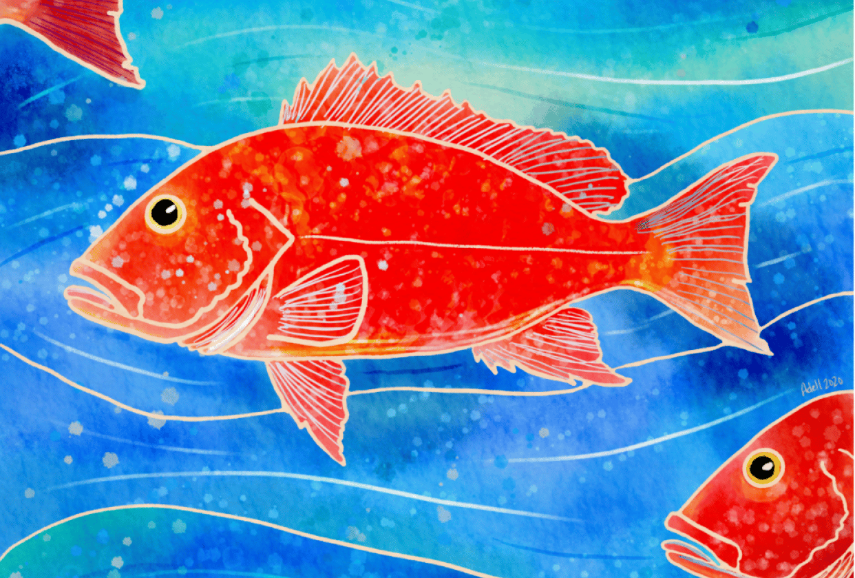 Red Snapper - student project