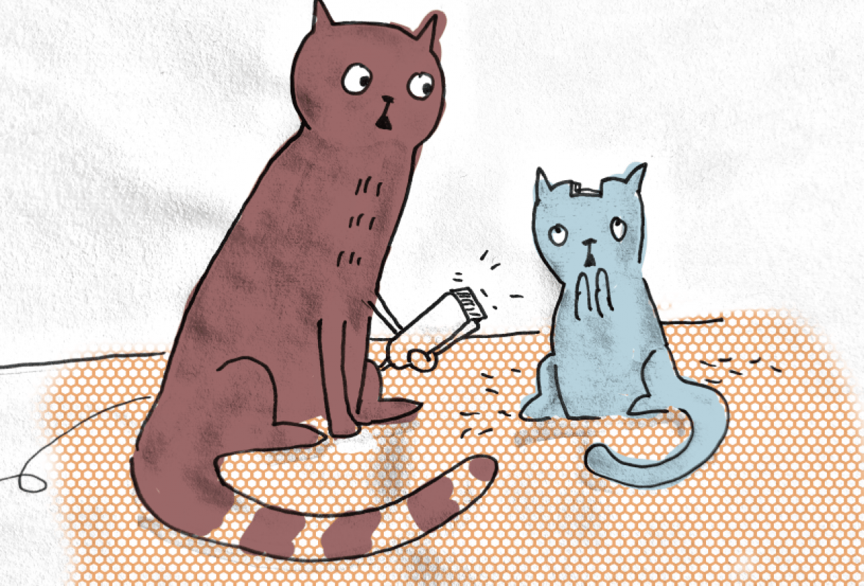 cats with a hair clipper! - student project