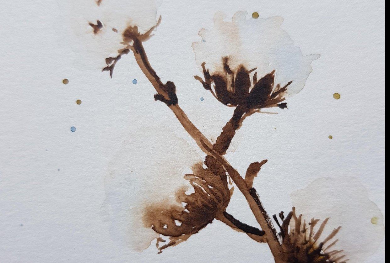 Flores de algodón de Garapinta - student project