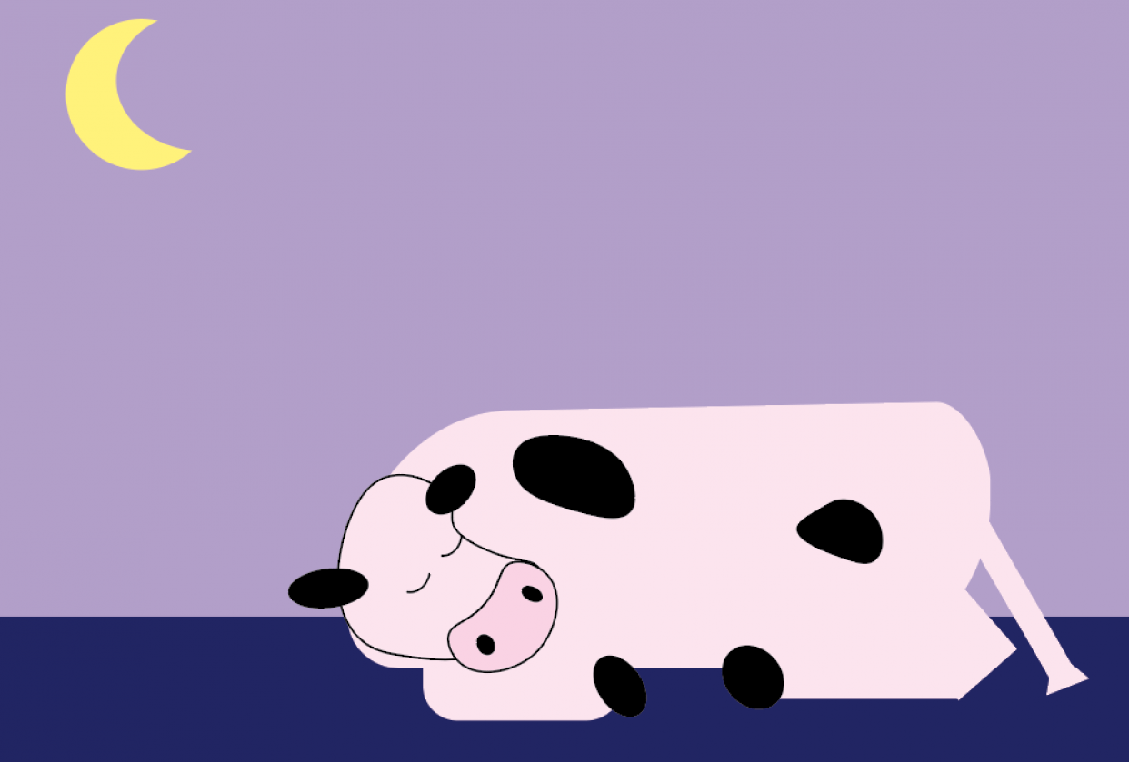 Cow Sleeping - student project