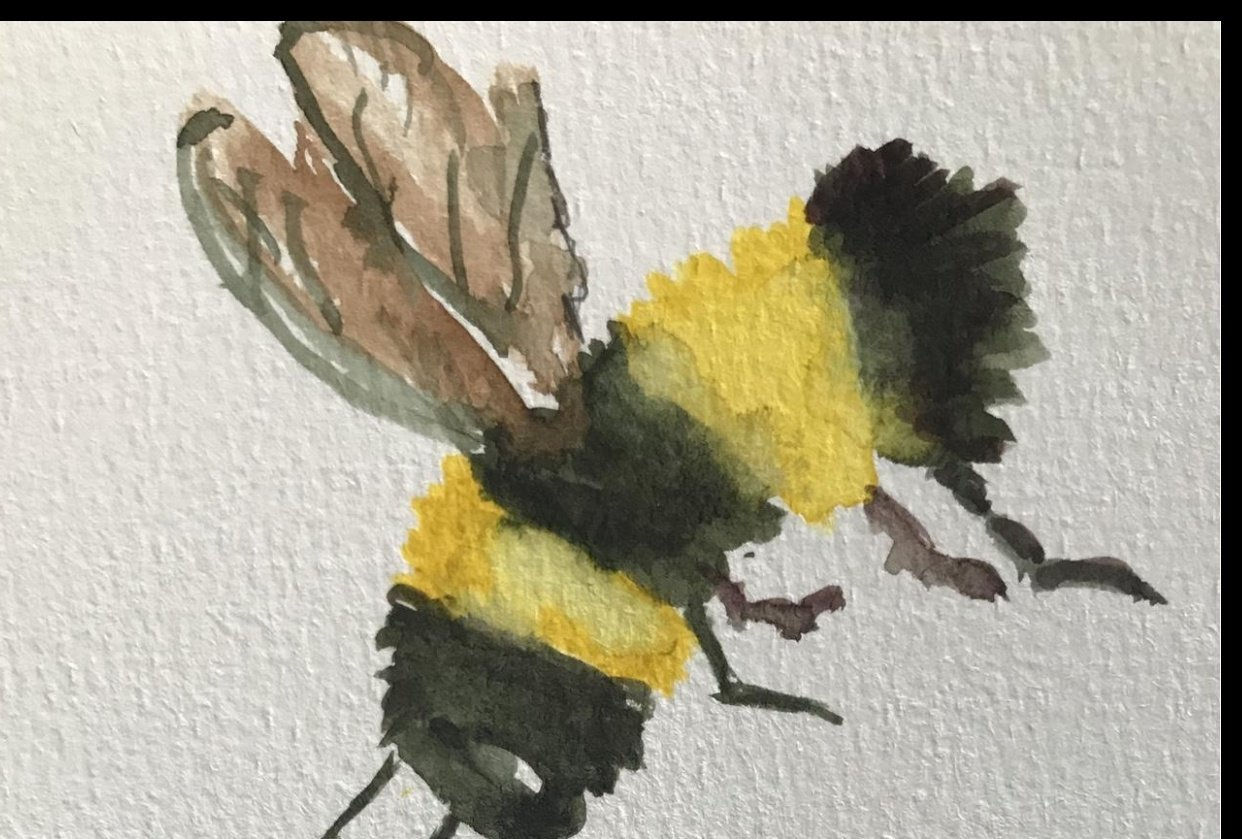 The bee - student project