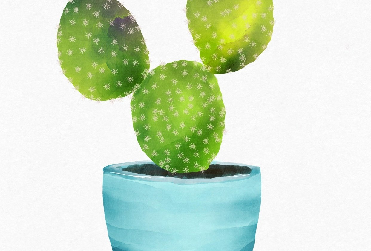 Mickey Mouse Cactus - student project