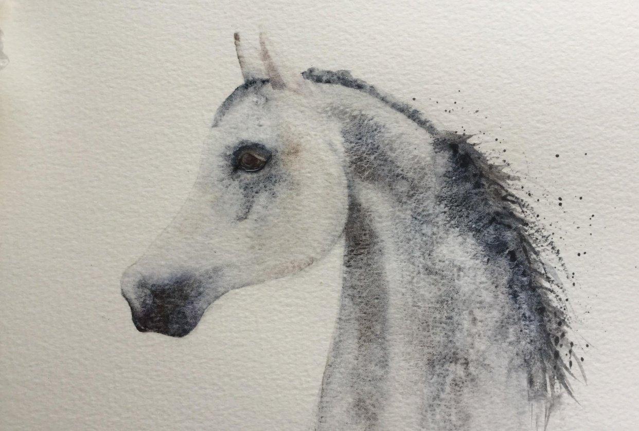Arabian Horse - student project