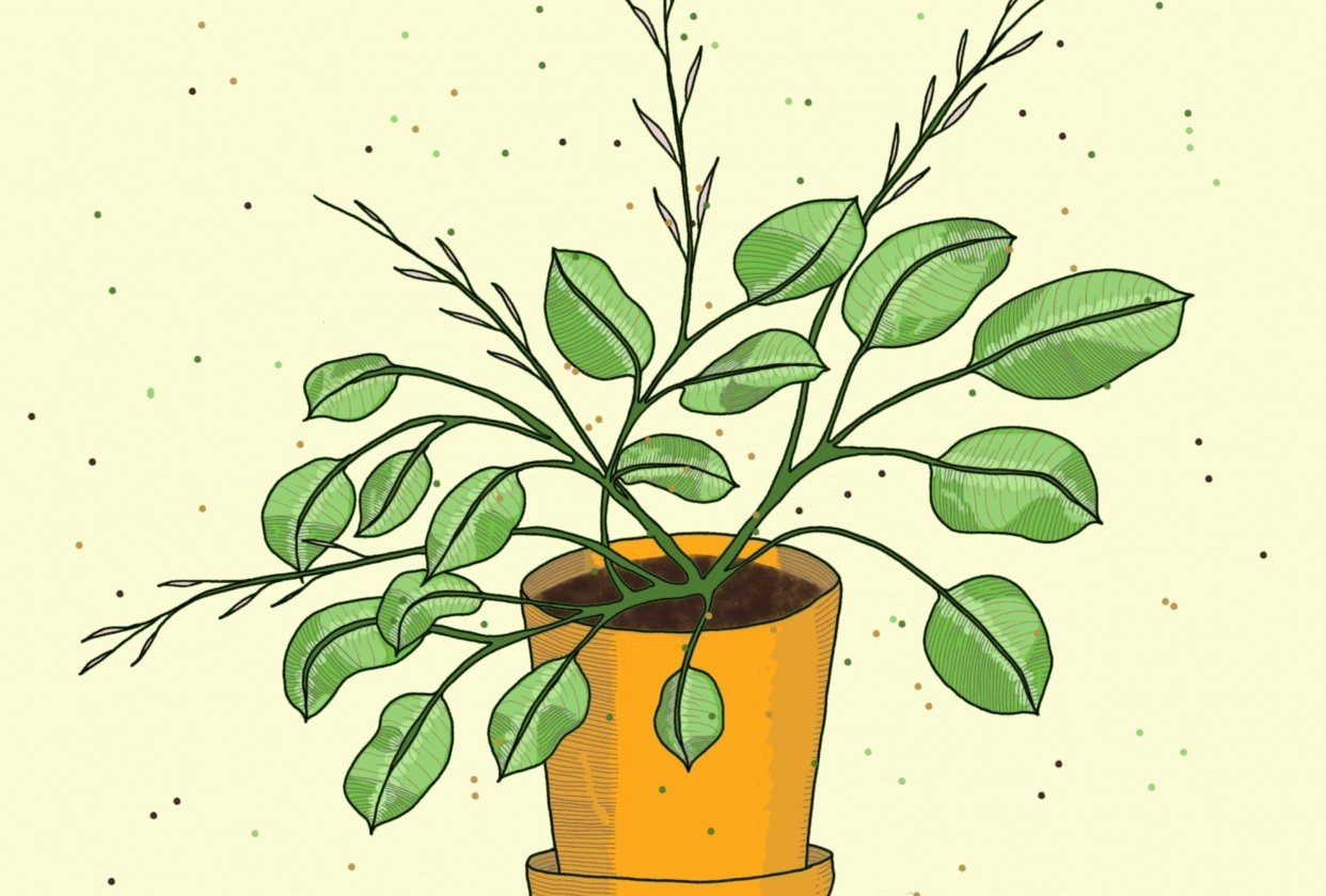 Prayer Plant - student project