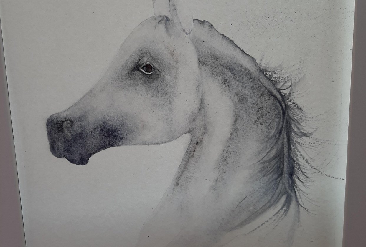 Arabian Horse:-) - student project