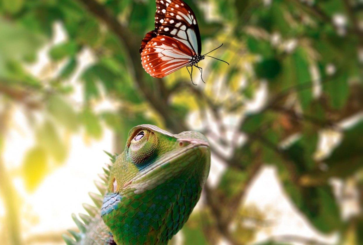 Photorealistic Chameleon - student project