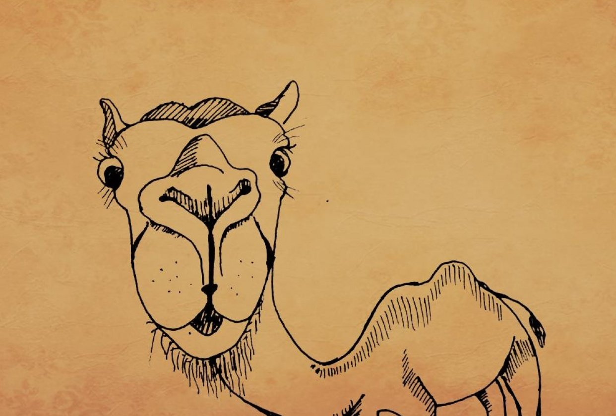 camel cuter characters - student project