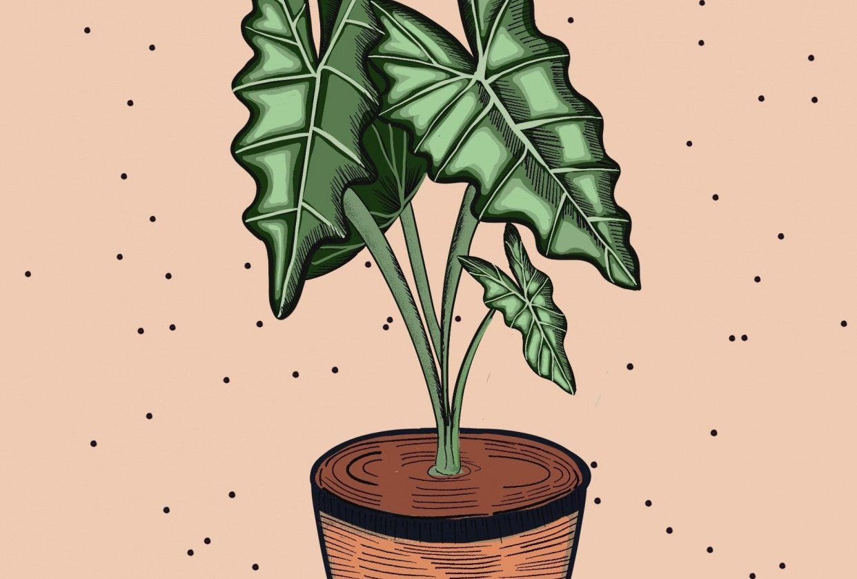 Inky plant - student project