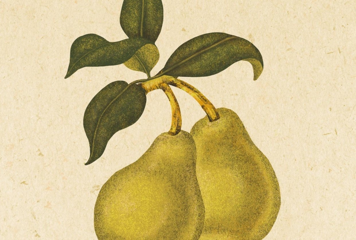Textured Pears - student project