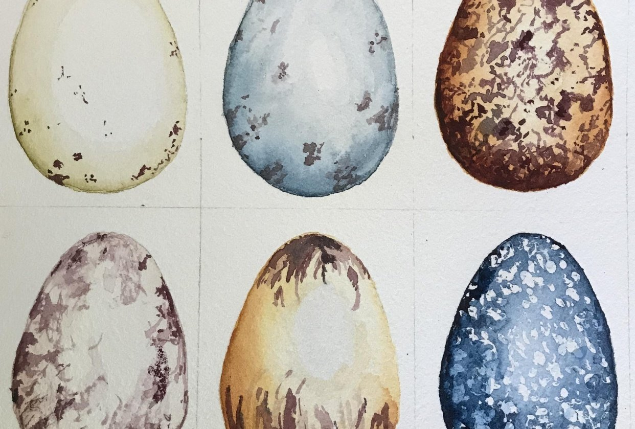 Watercolour eggs - student project