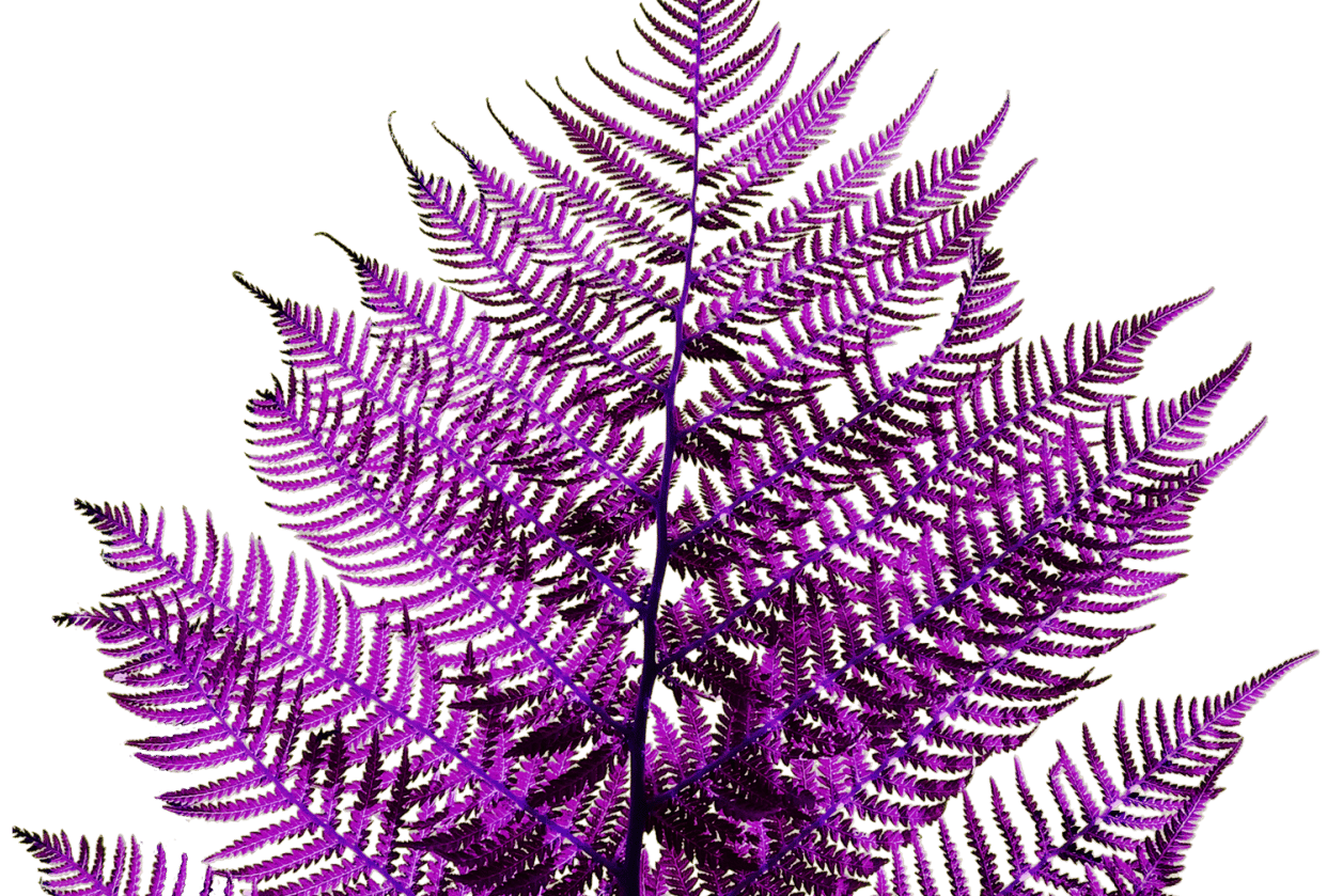 Fern - student project