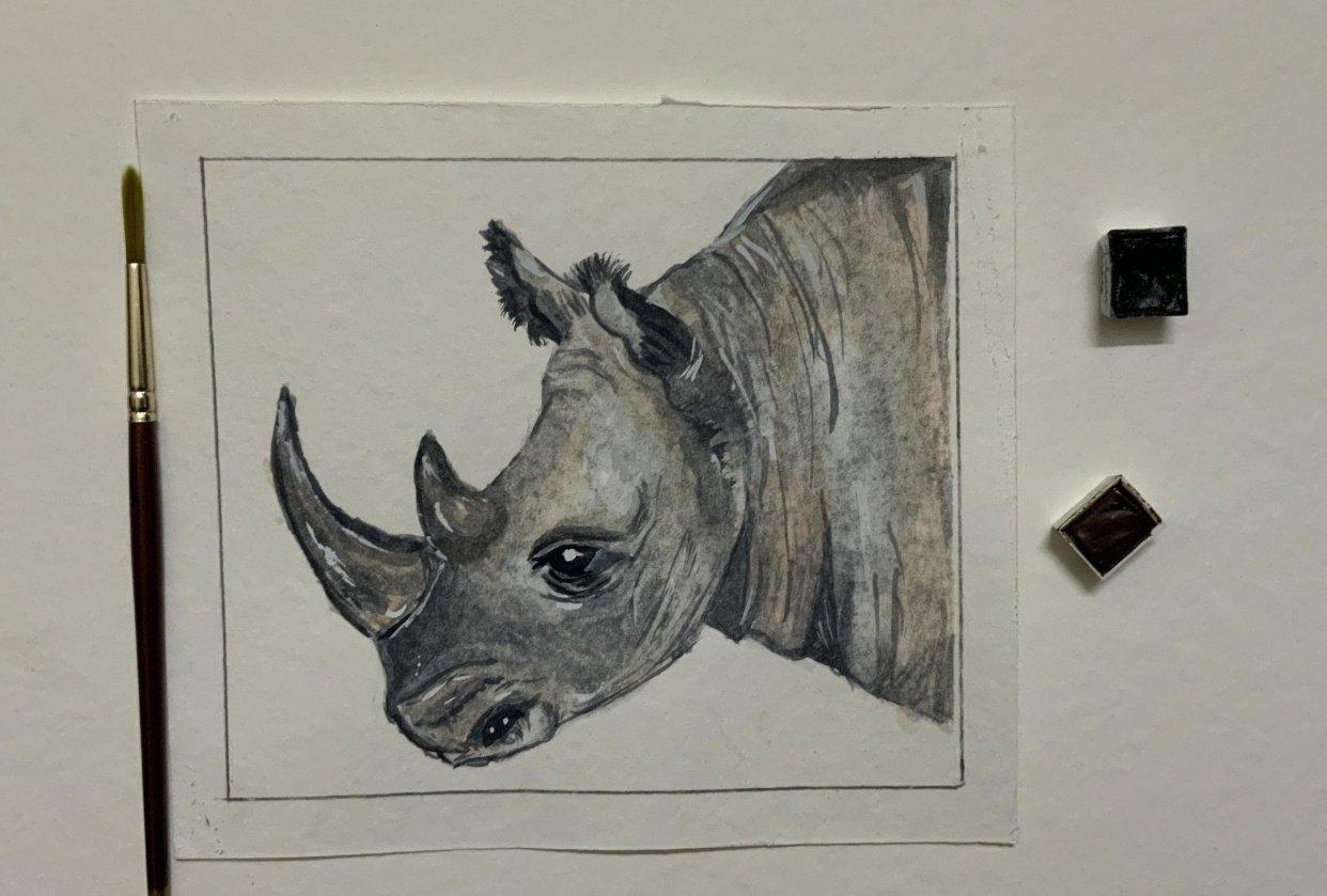 Watercolour Rhino - student project