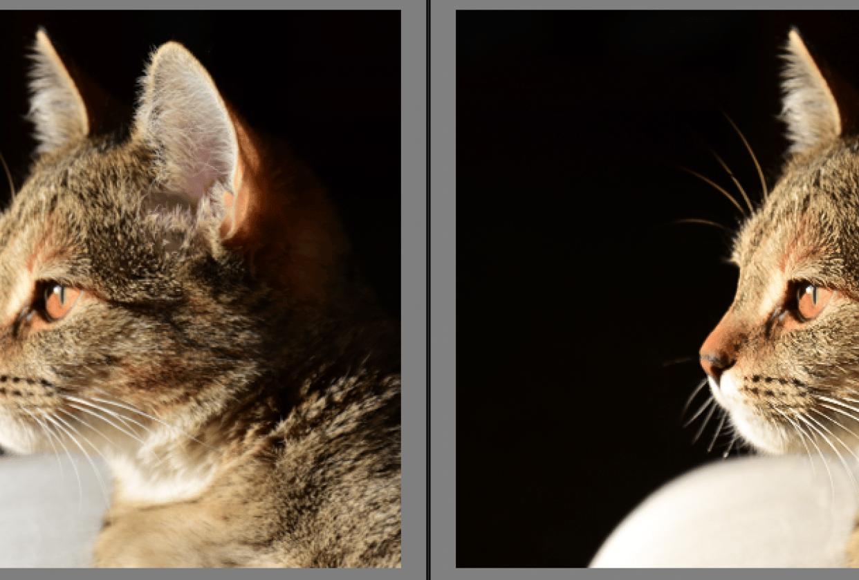 Rimpy the Cat - student project
