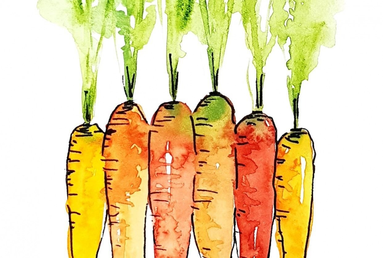 Watercolor carrots - student project