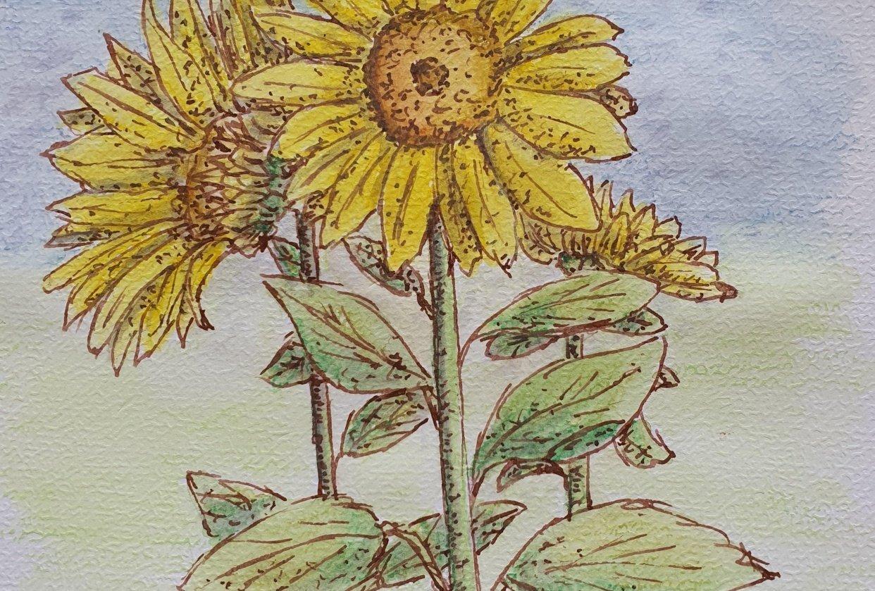 Sunflower Fun - student project