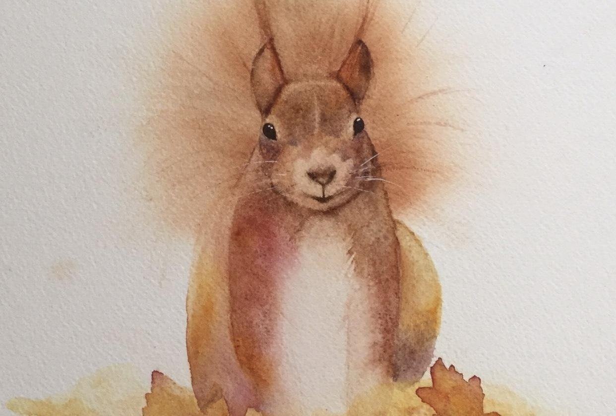 Red Squirrel - student project