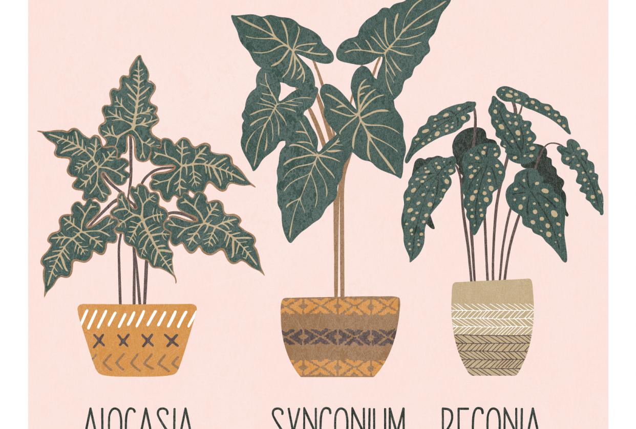 Plants illustrator iPad - student project