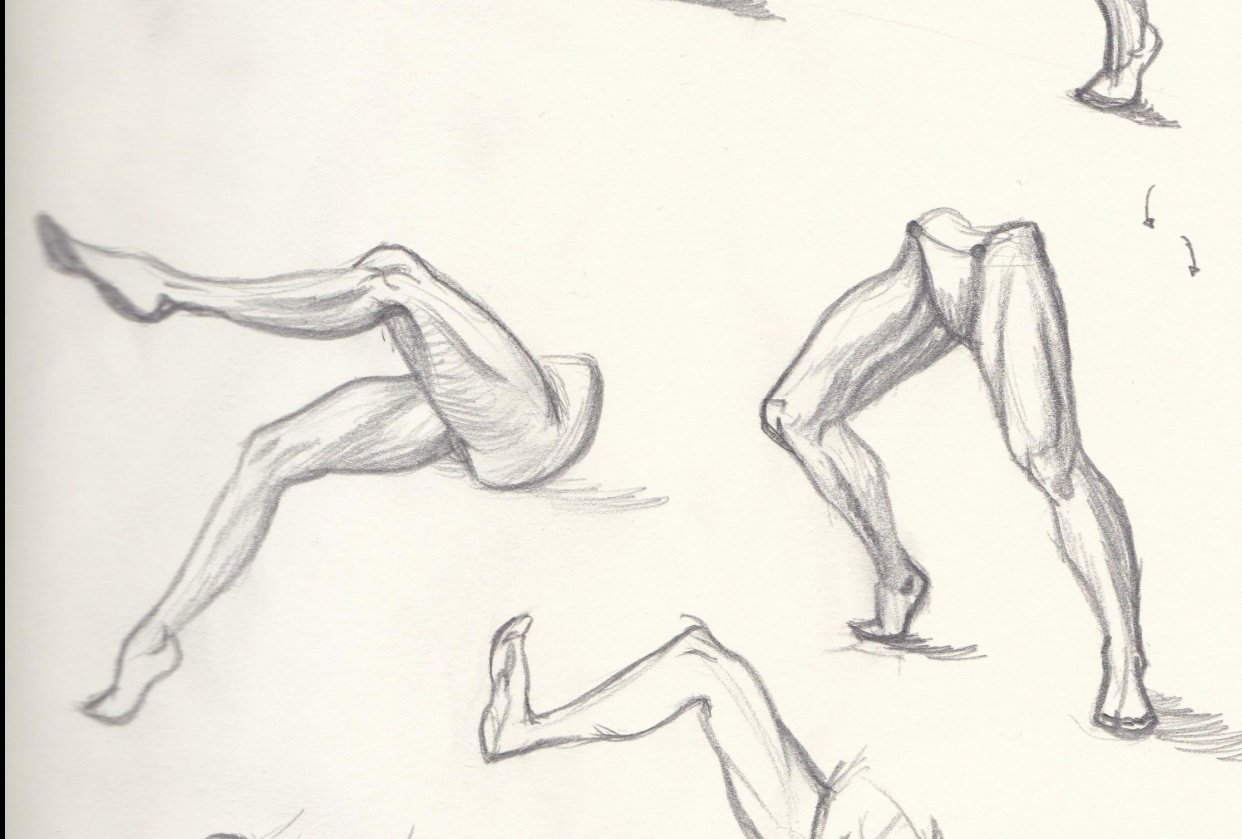 leg anatomy - student project