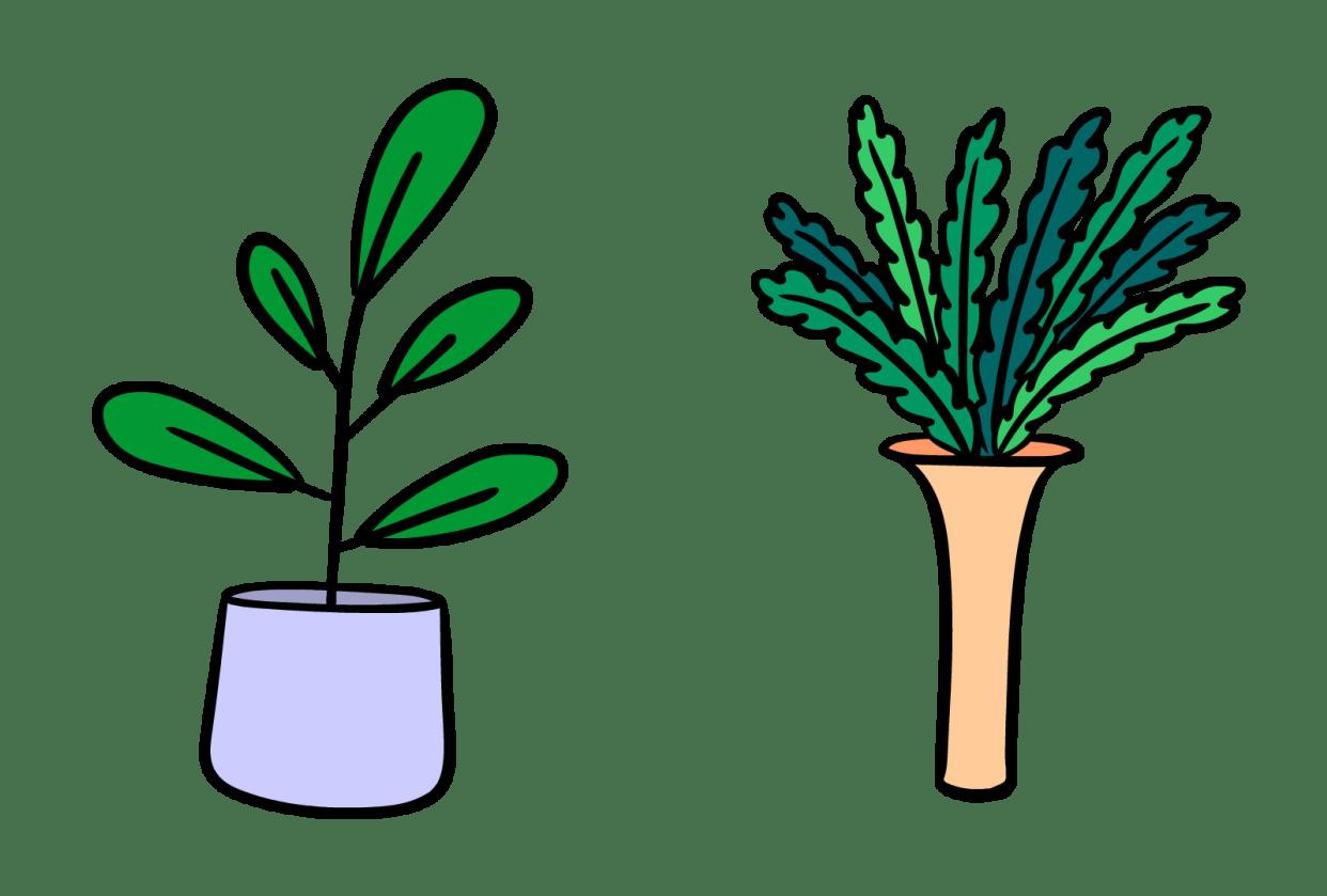 Plants Morph - student project