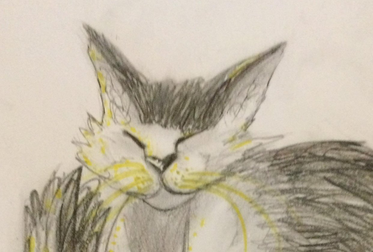 Expressive Drawing - Old Cat - student project