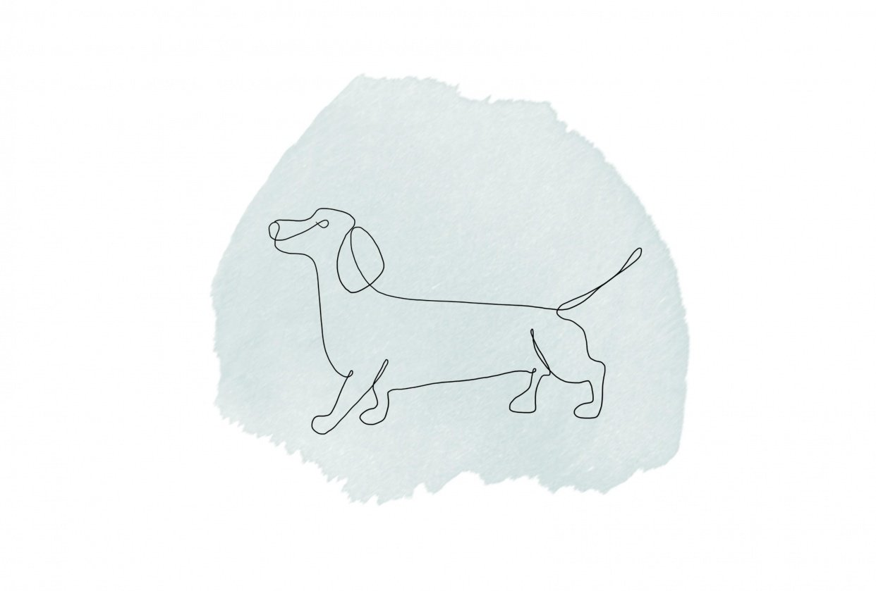 One line Dachsund with watercolour - student project