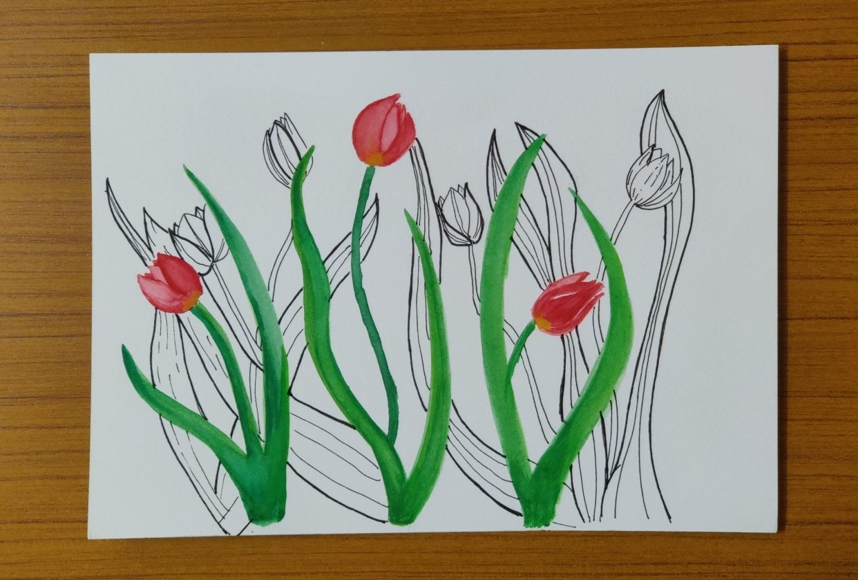 Tulip water color and sketch - student project