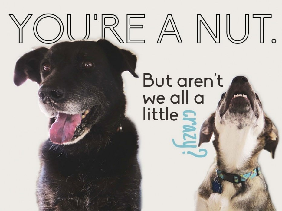 You're a nut. - student project