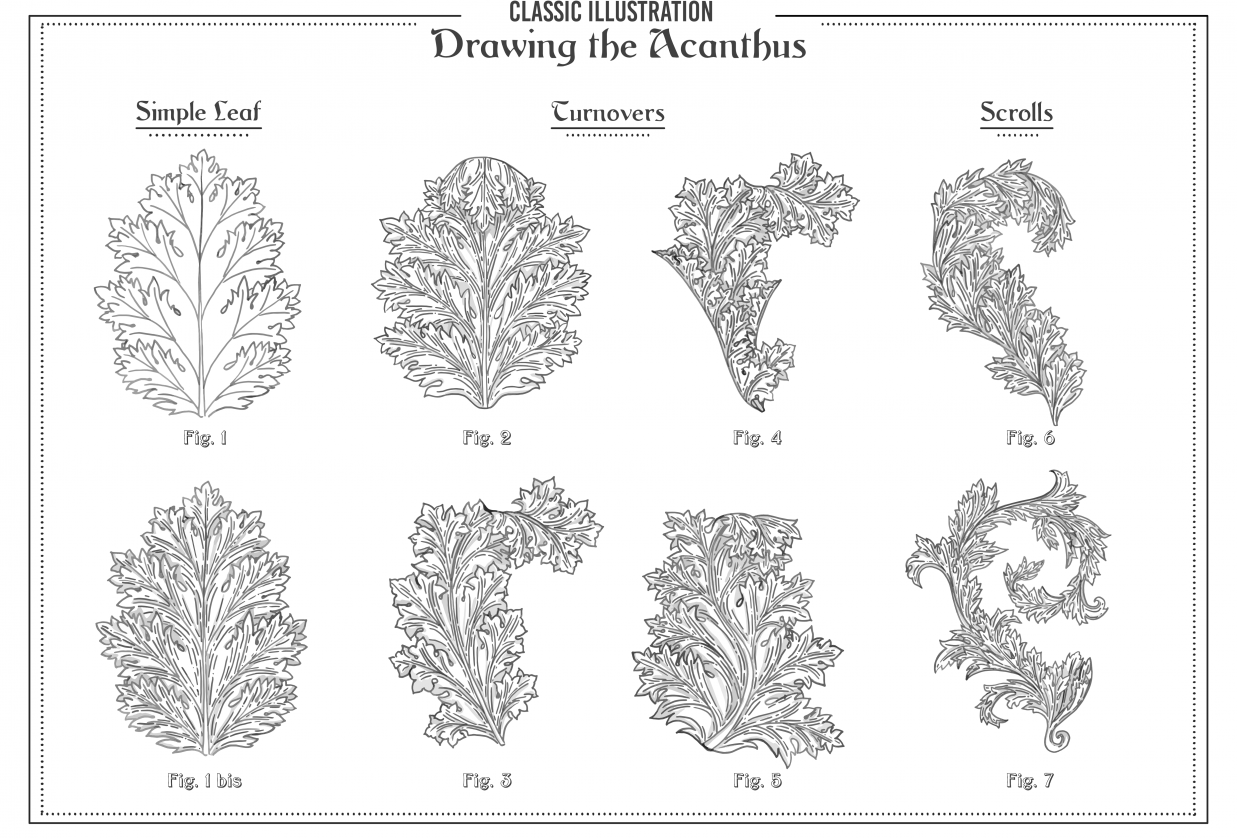 Drawing the Acanthus - student project