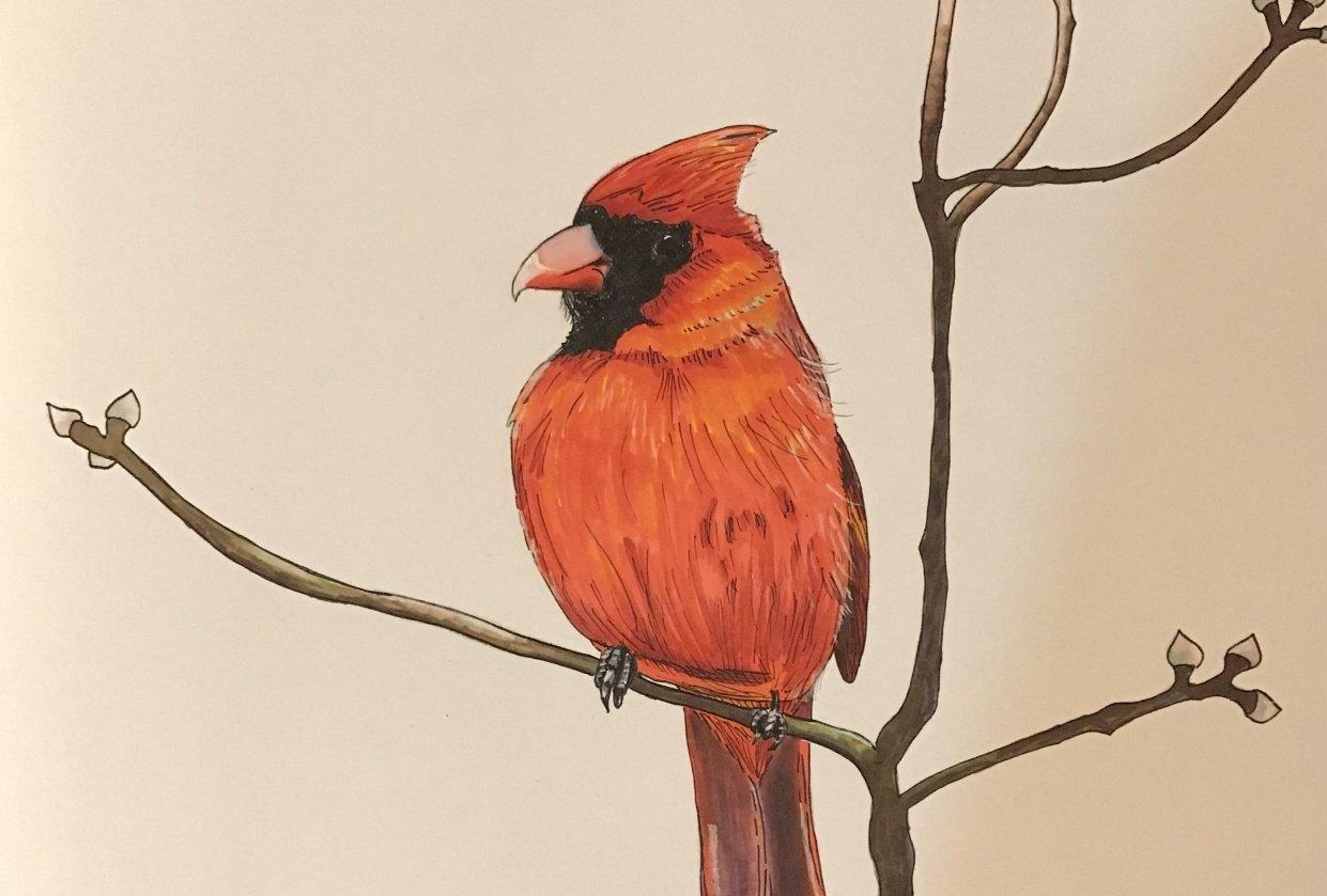 Cardinal Marker/Pen - student project
