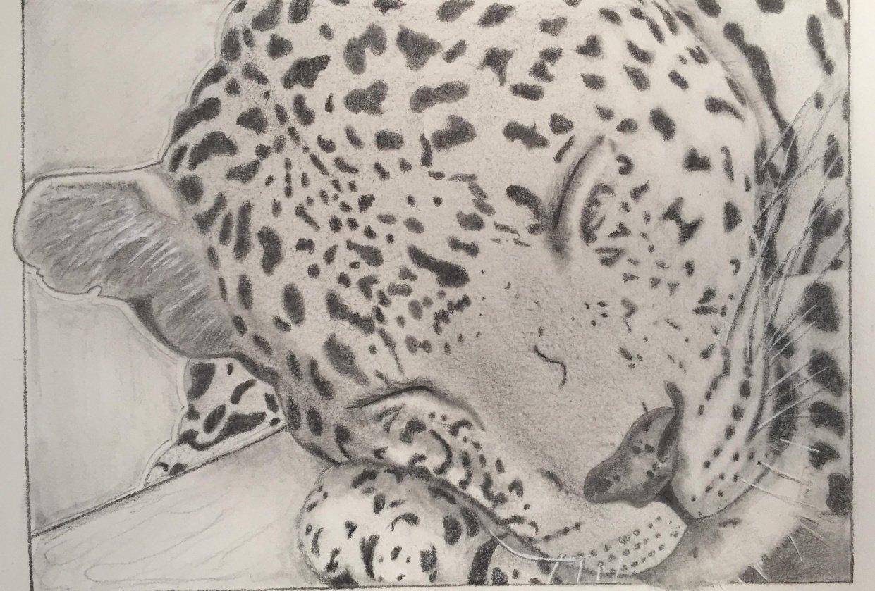 Cheetah - student project