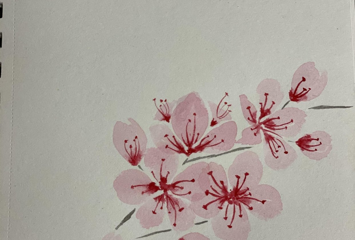 Cherry blossom - student project
