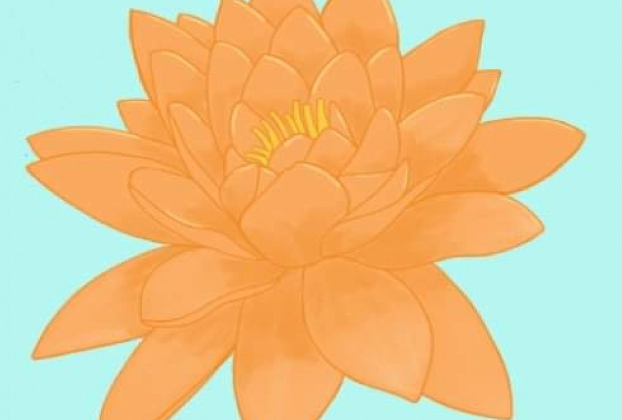 Water lily - student project