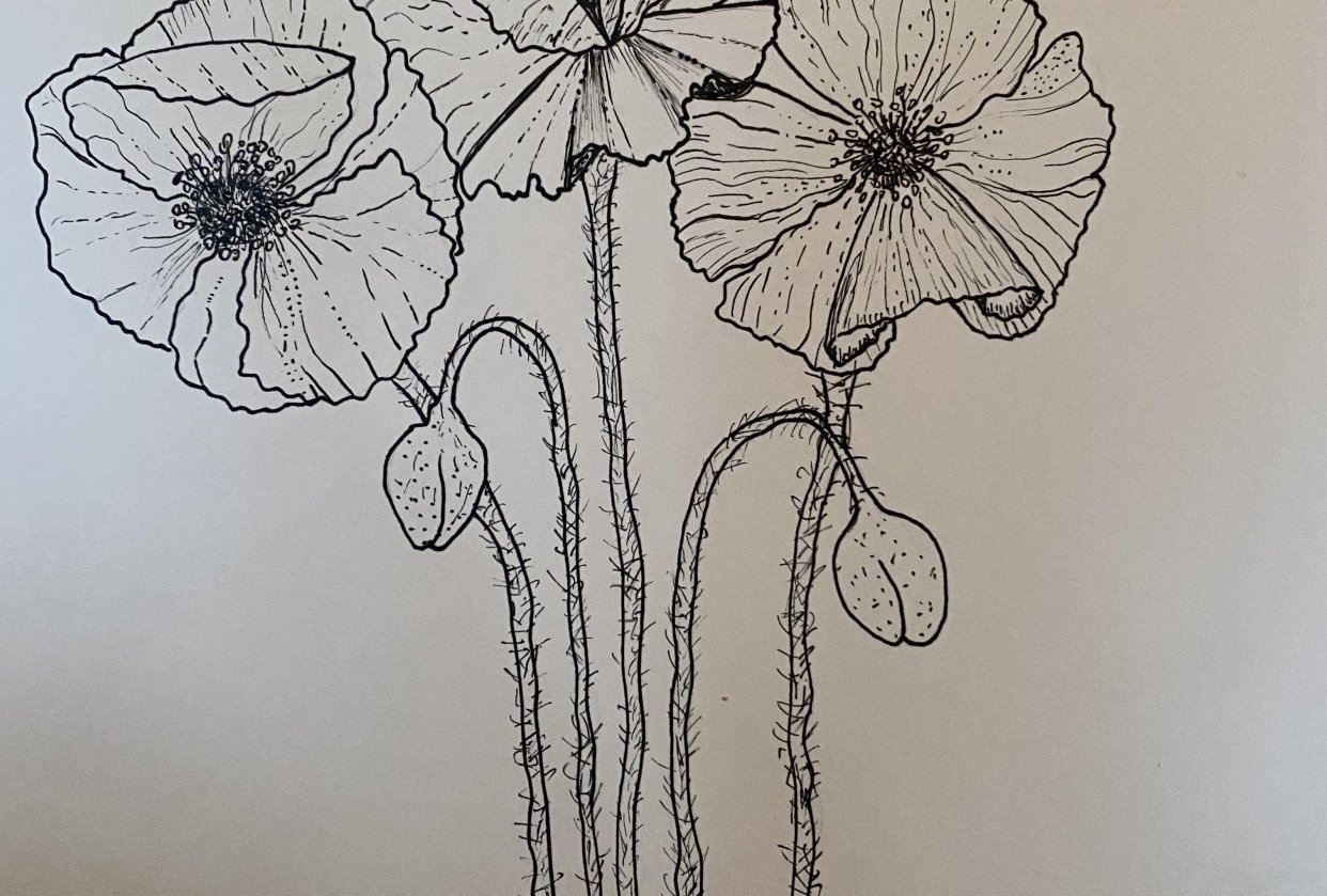 Poppies and hydrangeas - student project