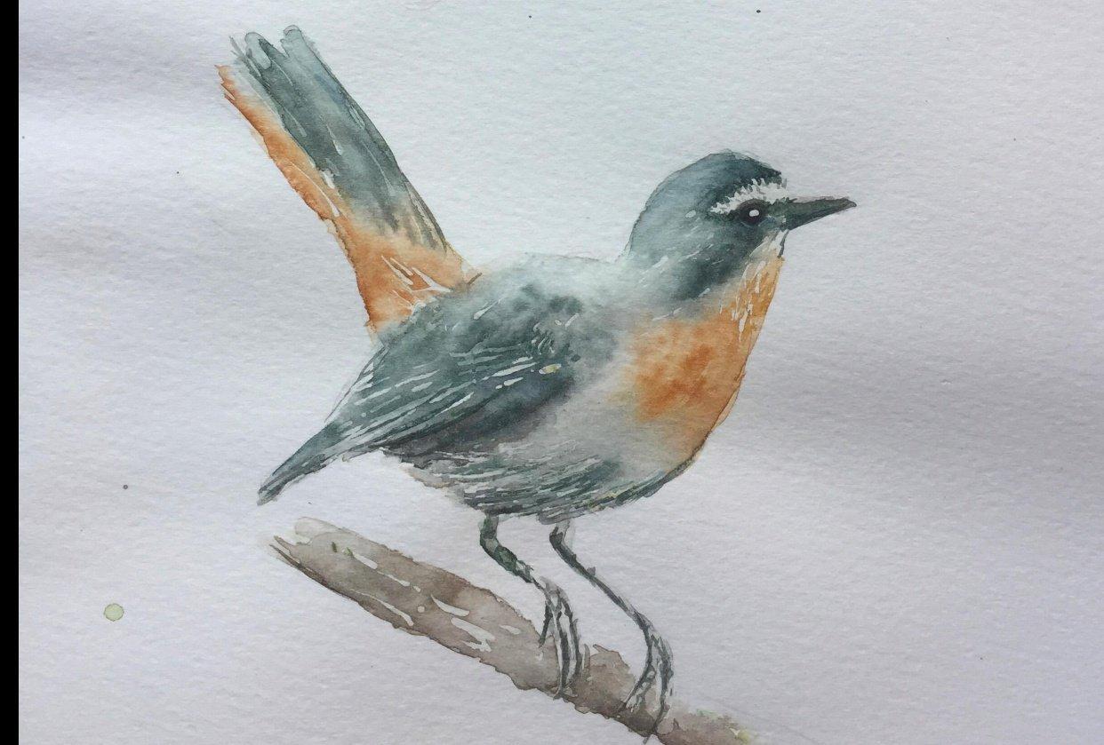 Cape Robin Watercolour - student project