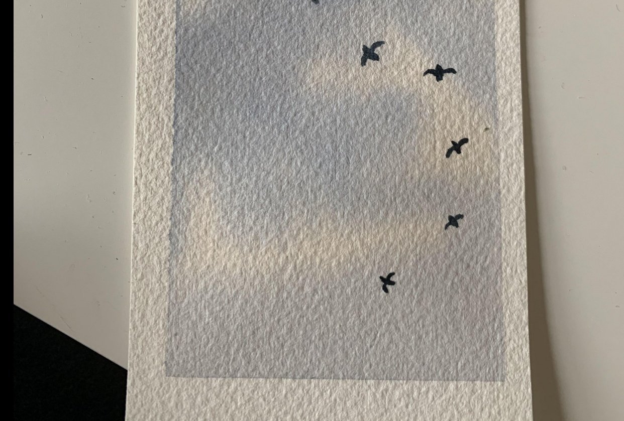 Birds - student project