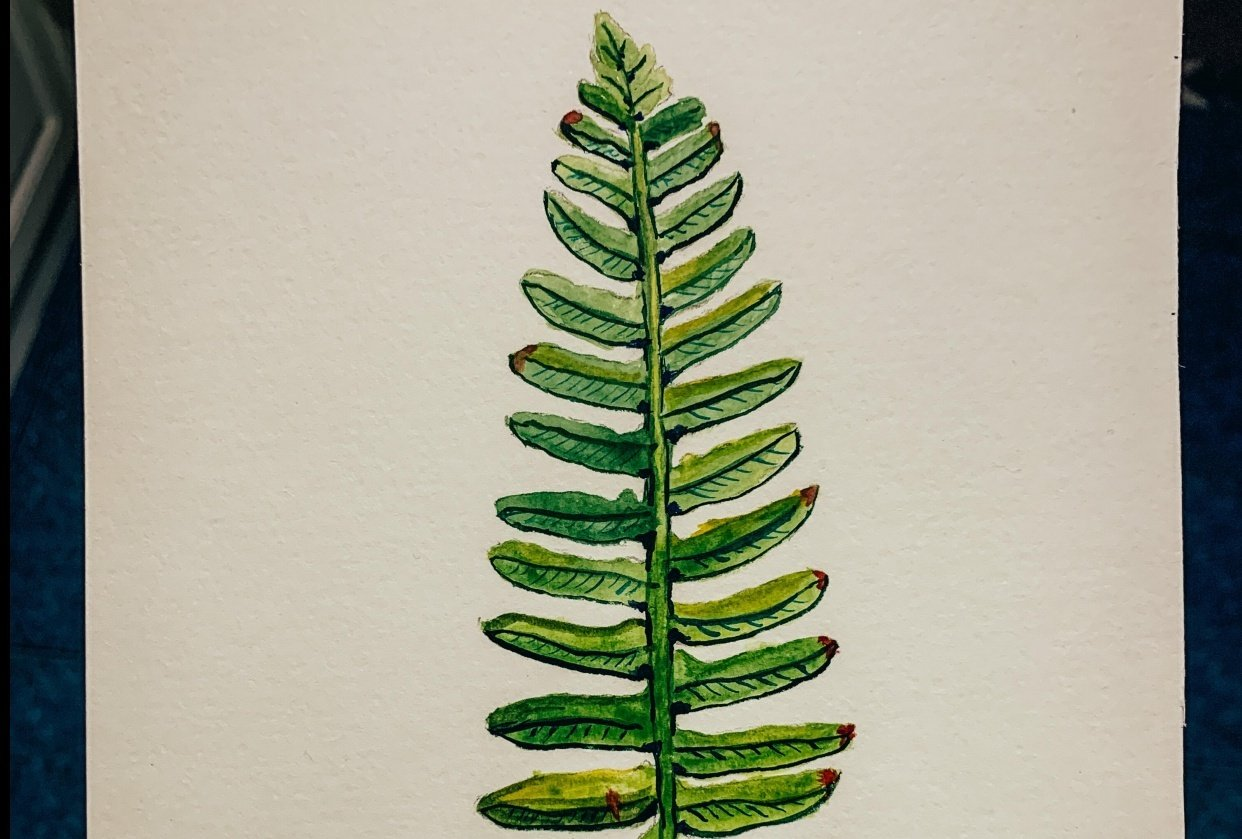 Fern with watercolour - student project