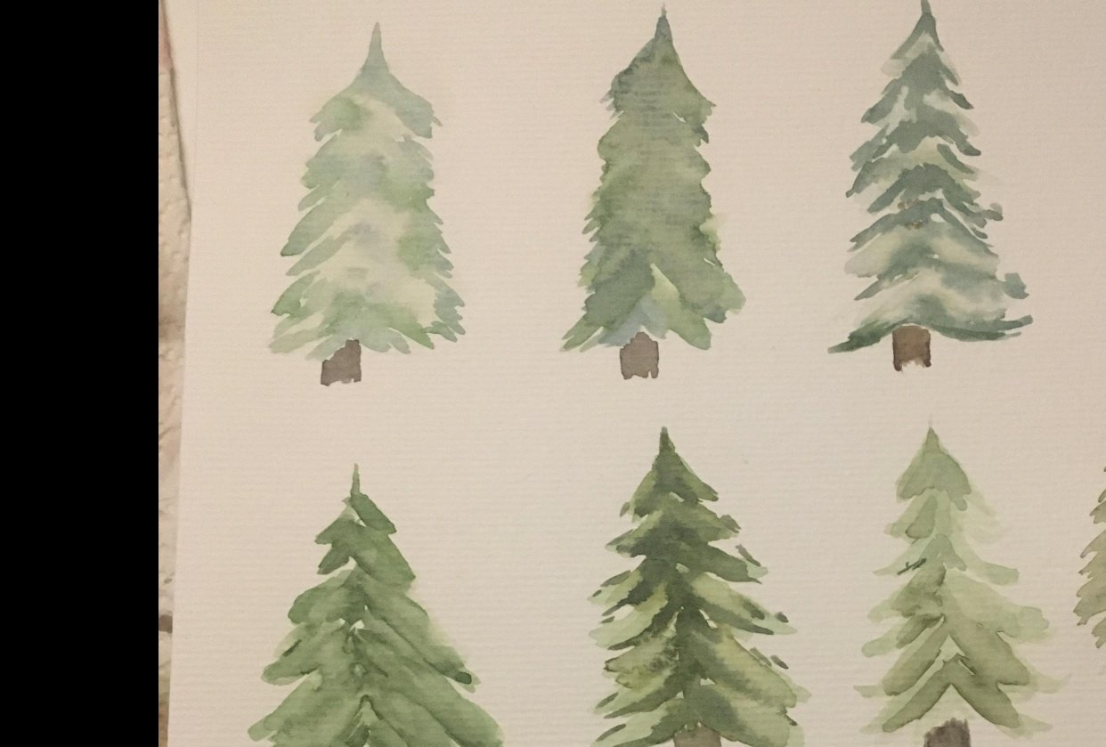 Christmas trees - student project