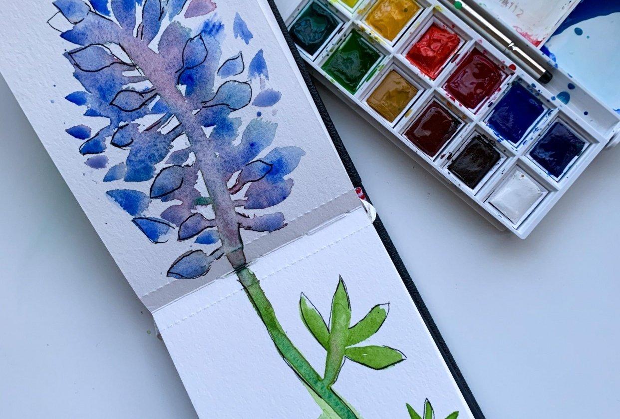 Bluebonnet - Watercolor + Ink - student project