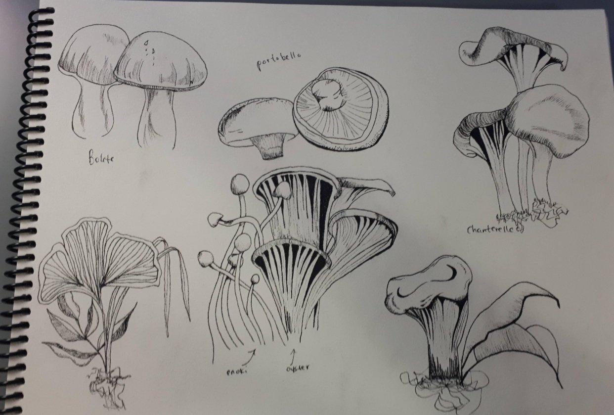 Plants/mushroom library - student project