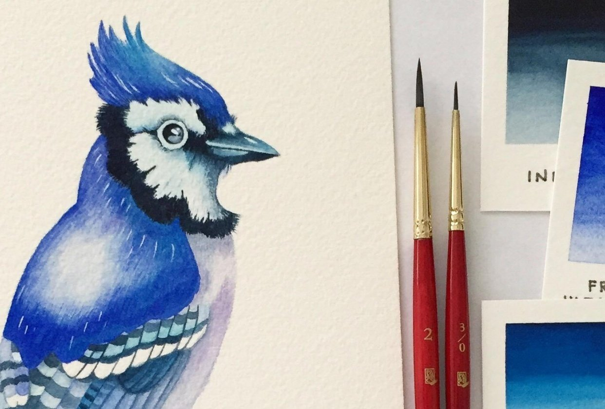Watercolour Blue Jay - student project