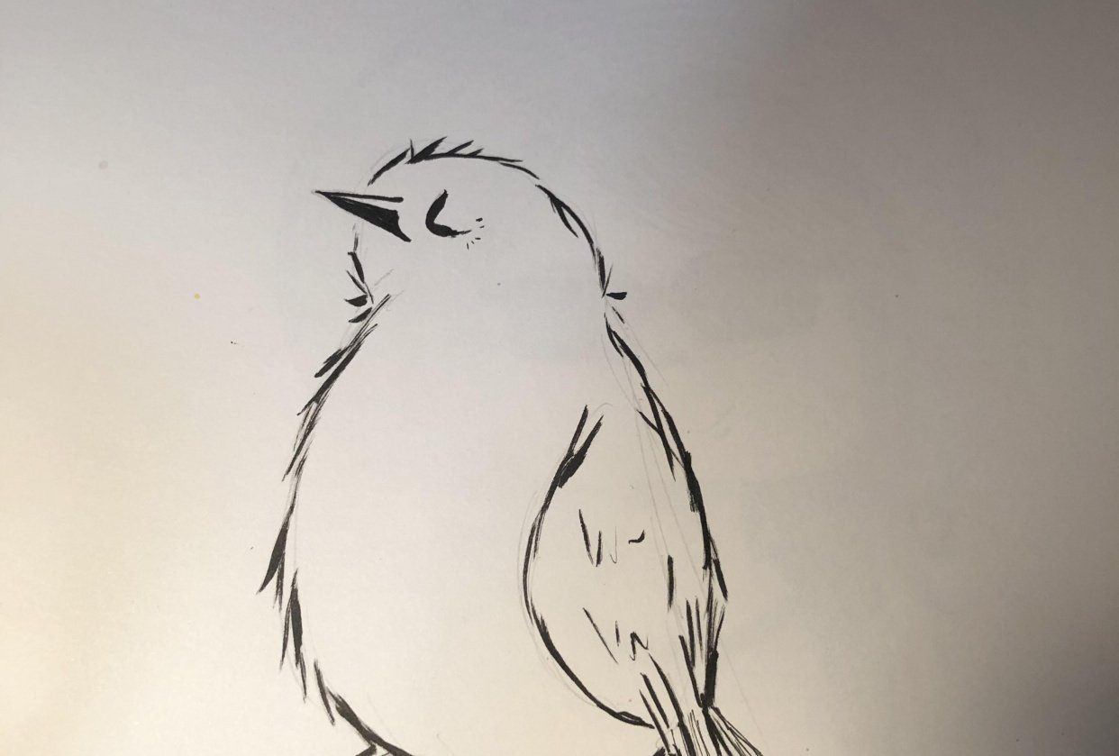 Drawing practice - student project