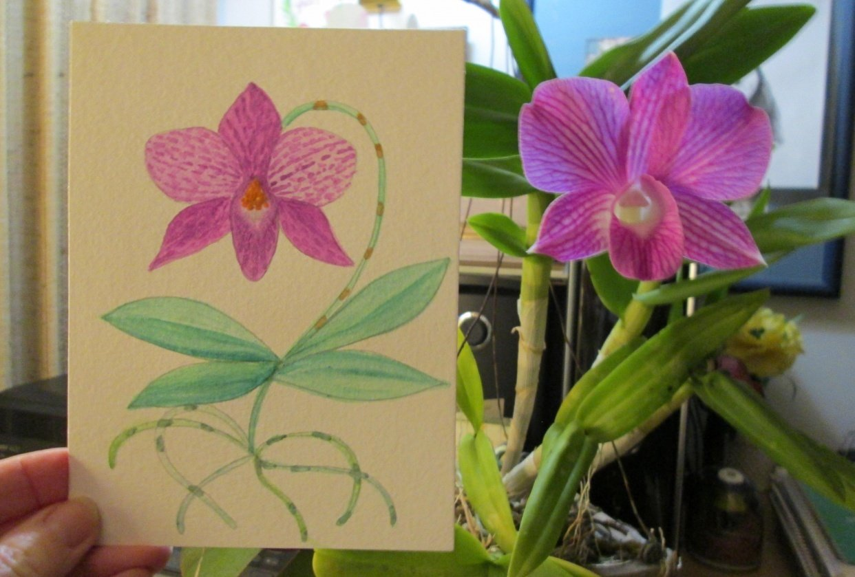 Watercolor Orchid - student project