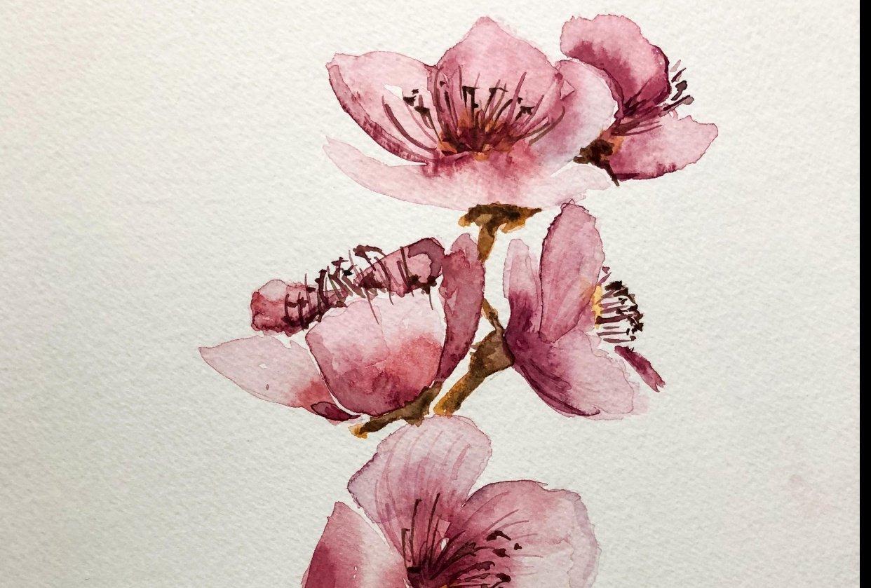 Fleurs de cerisiers - student project