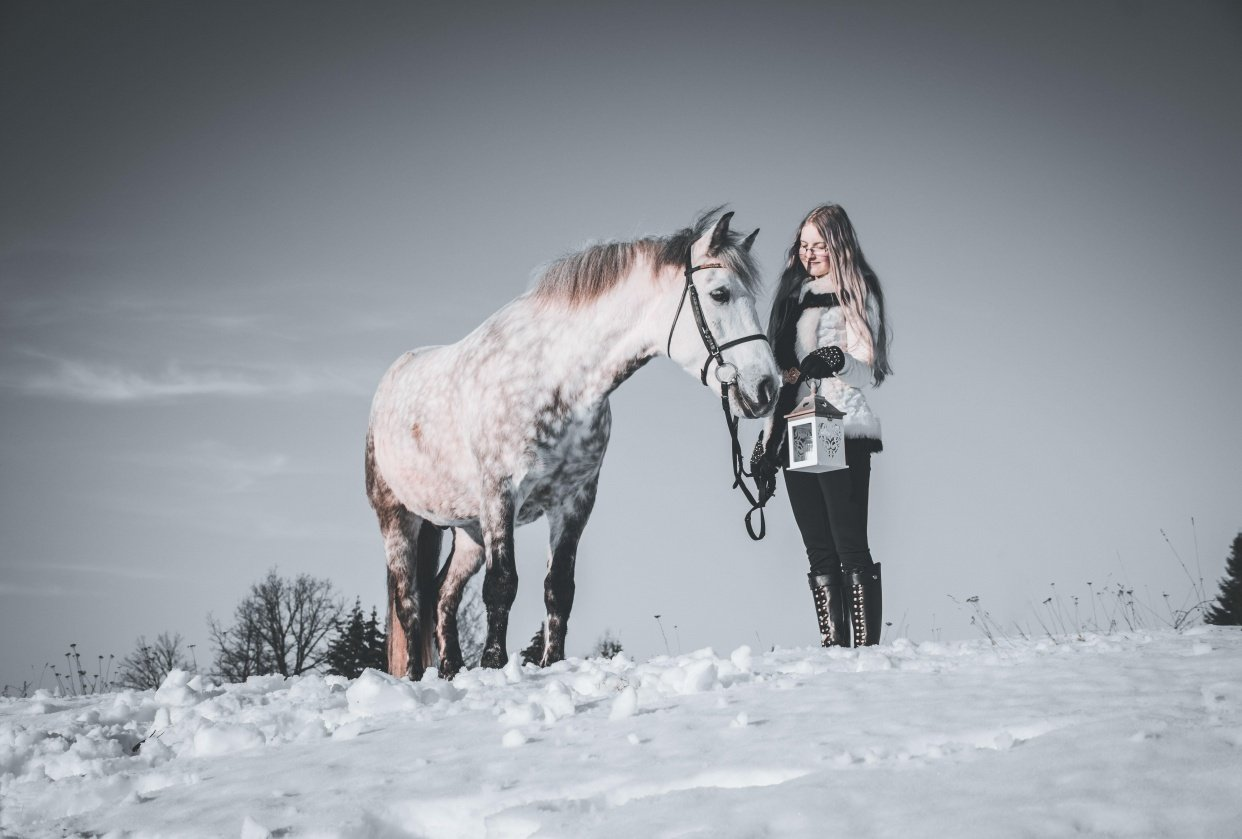 Horses - student project
