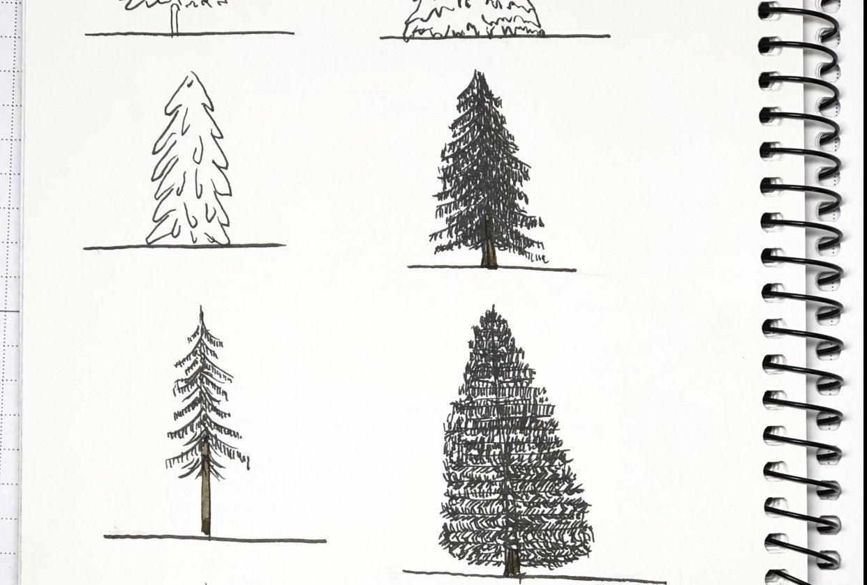 Drawing Basic Evergreens - student project
