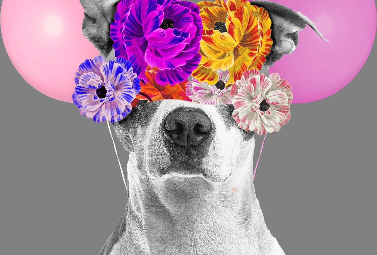 dog flower collage - student project