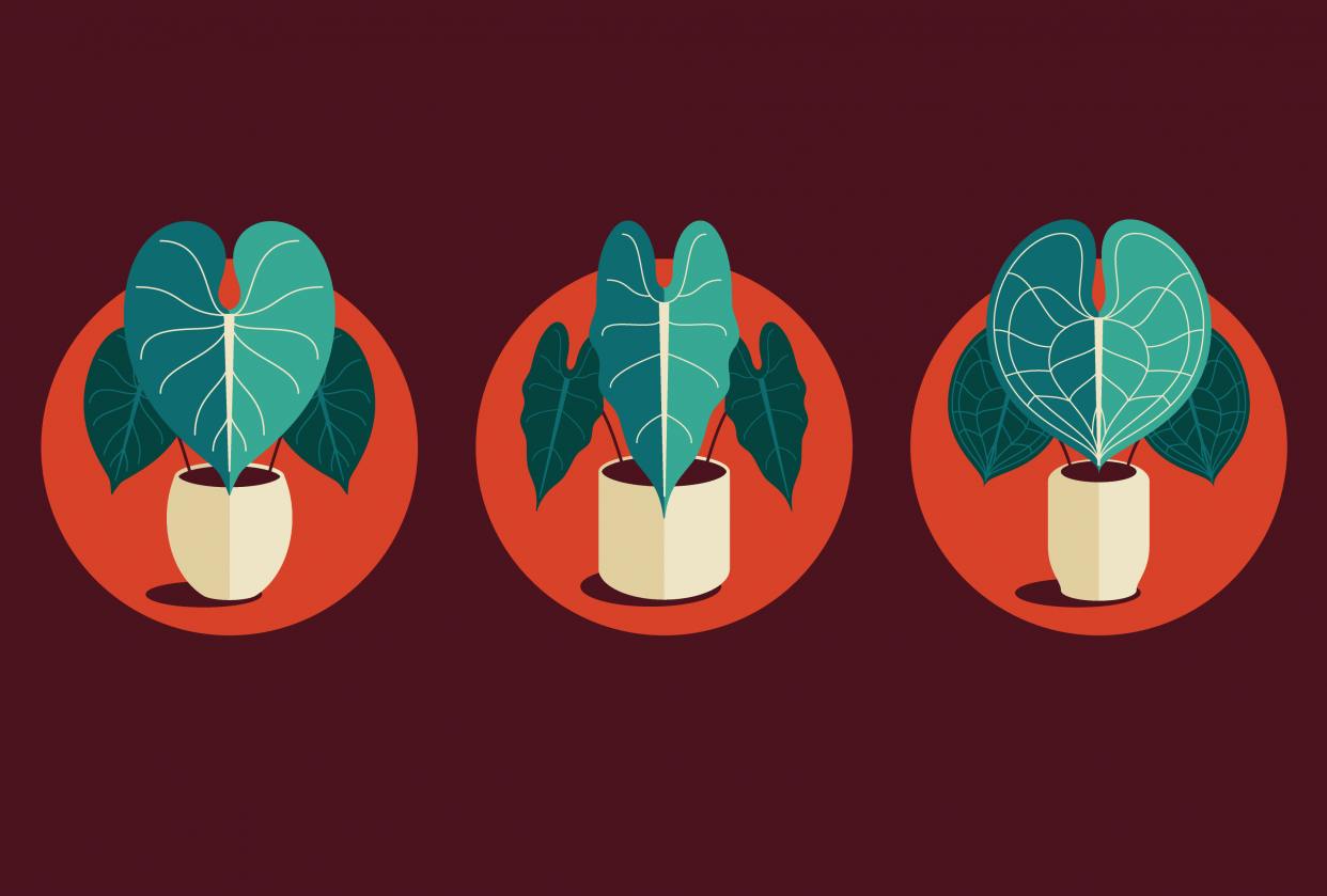 Plant Icon Set - student project